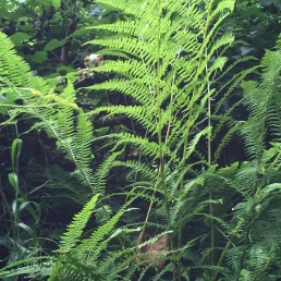 ferns, Welsh coast